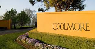 auction coolmore